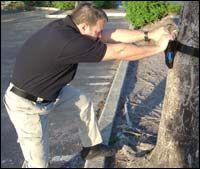 Tree Pull Test