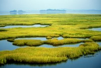 Top 3 Funding Sources for Watersheds & Wetlands Restoration