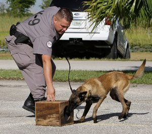 K-9 Inspector Freddie Long works with the dog Razor as he searches for cell phones hidden in a box during a demonstration at the Broward Correctional Institution in Ft. Lauderdale, Fla.