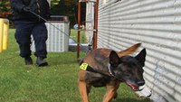 K-9 announcements: Dos and don'ts