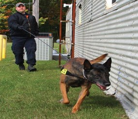 K 9 Announcements Dos And Donts