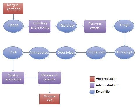 A suggested workflow for a temporary morgue. (Photo/Elsevier, Academic Press)