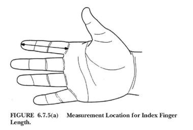 Figure 1: Using a straight ruler, measure the index finger length to the nearest 1 mm (1/16-inch) from the tip of the index finger to the base of the finger as shown here.