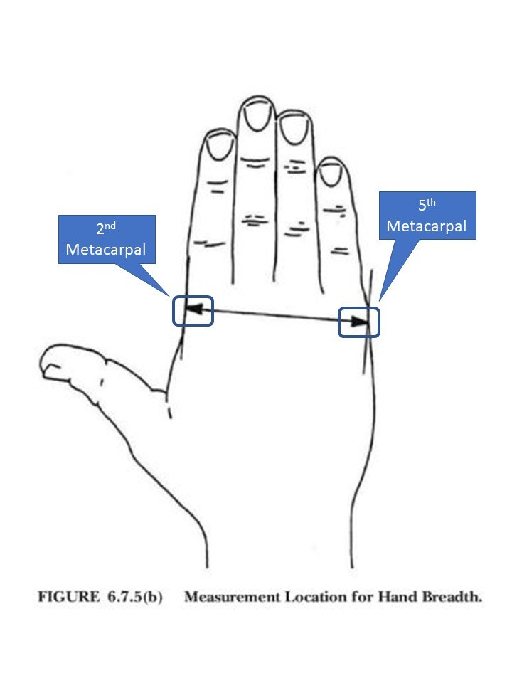 Figure 2: Measure the breadth of the hand to the nearest 1 mm (1/16inch) across the metacarpals (knuckles) on the back of the hand from the second metacarpal to the fifth metacarpal.