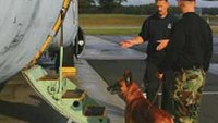 Mentoring your K-9 unit: Helping new handlers