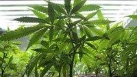 NY lawmakers agree to legalize recreational marijuana