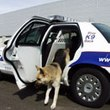 Havis K9 Transport Solutions