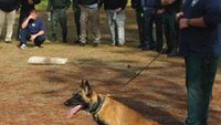 K-9 supervisory liability under federal law
