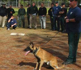The failure to adequately train for canine work creates a heightened risk of trouble for all involved.