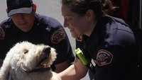 FirstNet, AT&T launch therapy dog program to support first responder health and wellness