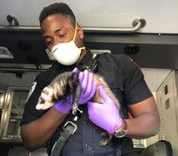 Photo of the Week: Mass. EMS crew rescues 'Bandit' from crash