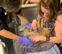 Ohio FD medics revive overdosing puppy