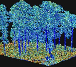 """Output from processing of terrestrial laser scanning data, representing an important fuel characteristic """"surface area"""" as illustrated by the different colors. This is input to next-generation fire behavior models."""