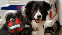 Photo of Week: Canine companion aids research on dispatcher stress
