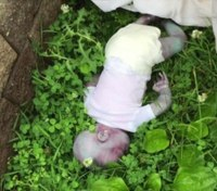 Dead 'baby' found in New York park turns out to be hoax