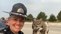 Photo of the Week: What a hoot