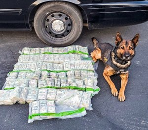 California Highway Patrol K9 Beny assisted in locating $915,000 in cash that had been dumped on the side of the road during a vehicle pursuit. (Photo/CHP)