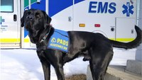 PACE 2019 preview: Canine-facilitated mental health initiative
