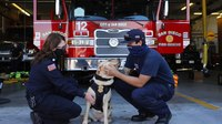 Canine companions join San Diego Fire-Rescue to offer emotional support