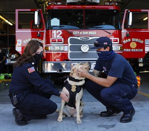San Diego Fire-Rescue Chaplain Betsy Salzman (left) visits station 12 with Gen, a golden retriever, one of three dogs part of a new canine program in the SD Fire-Rescue Department on Wednesday, Dec. 9, 2020 in San Diego, CA. The three dogs stay with chaplains and will visit firefighters as well a victims. Here, Gen gets some attention from Firefighter Shane Farias.