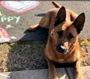 Braintree police dog Kitt was shot and killed in an altercation Friday, June 4, 2021.