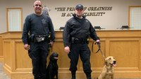 These COVID-sniffing K-9s are the first in the United States