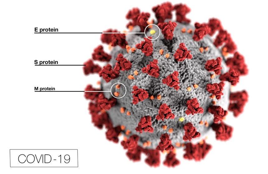 Figure 1: This illustration reveals ultrastructural morphology exhibited by coronaviruses. Note the spikes that adorn the outer surface of the virus, which impart the look of a corona surrounding the virion, when viewed electron microscopically.