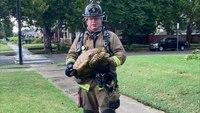 Okla. City FFs rescue vocal parrot, quiet tortoise after lightning sparks house fire