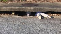 911 call about toddler in storm drain leads cops to 'It' Halloween prank