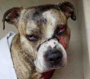 Winks will require surgery to remove his eye after being shot in the face.