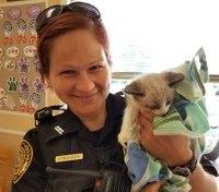 Officer picks up kitten from vet for family whose vehicle broke down
