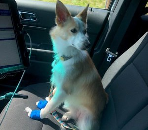 Pepper, the dog, had been in one of the involved vehicles and had bleeding paws from a too-short nail trim at the groomer. (Photo/ Rutherford County Fire & Rescue)