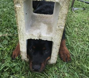St. Johns County Fire Rescue say 6-month-old Fifi managed to wedge her head into one of the block's holes. (Photo/St. Johns County Fire Rescue)