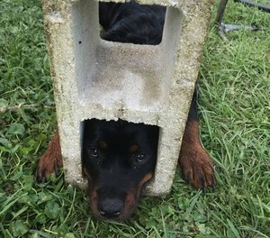 St. Johns County Fire Rescue say 6-month-old Fifi managed to wedge her head into one of the block's holes.