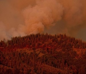 A California forest fire just west of Yosemite National Park was steadily growing Saturday after two more firefighters were injured while battling the flames in blazing summer heat.
