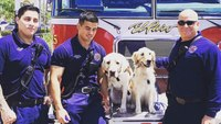 Therapy dogs sent to comfort El Paso victims, first responders