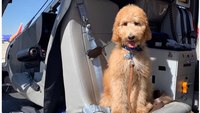 Calif. county AMR crews to get therapy dog