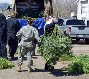 In this April 14, 2016 file photo, investigators load marijuana plants onto a Colorado National Guard truck outside a suspected illegal grow operation in Denver. (AP Photo/P. Solomon Banda, File)
