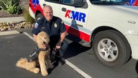 Calif.therapy dog provides support to AMR paramedics