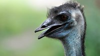 Animal control officers capture emu running through N.J. city