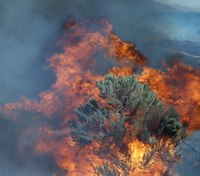 US releases review on removing vegetation to stop wildfires