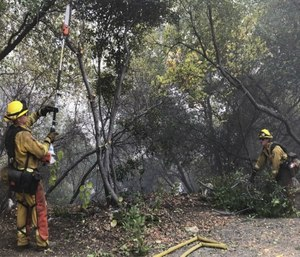 Cal Fire firefighters cut down potential fuel for the Briceburg Fire off Highway 140, south of the Merced River in Mariposa County, Calif. (Vikaas Shanker/The Merced Sun-Star via AP)