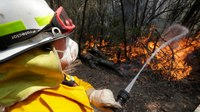 Australian wildfires: Looking back 1 year later