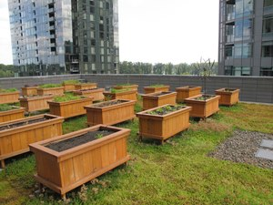 """This Aug. 12, 2013 photo provided by the City of Portland Bureau of Environmental Services shows the ecoroofs in South Waterfront and Elizabeth Caruthers Park in Portland, Ore. Many jurisdictions are requiring greenery-covered """"ecoroofs"""" on some buildings."""