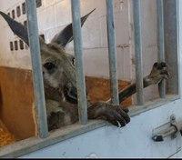 Police capture kangaroo hopping through Fort Lauderdale