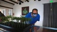 Recreational marijuana legal to possess, grow in New Mexico