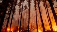 Wildfires still raging in Northern California as gusty winds bring threat of flareup