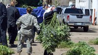 Overwhelmed by illegal pot, Ore. county declares emergency