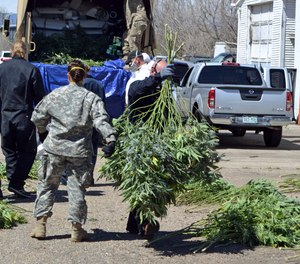 In this April 14, 2016, file photo, investigators load marijuana plants onto a Colorado National Guard truck outside a suspected illegal grow operation in north Denver.