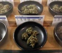 Marijuana laws: Why medics should just say no